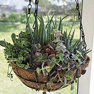 DE14_hanging-basket-succulents