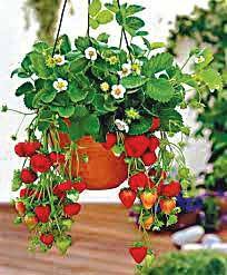 DE14_strawberries-basket