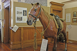 FE15_Museum-WWI-Horse(6)