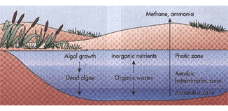 Oxidation ponds : A pond that contains partially treated wastewater which is then left to allow the growth of algae and bacteria which decompose therest of the waste.
