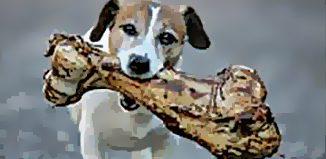 F_AP15_Vet-dogandbone.jpg