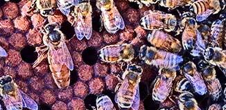 F-JN15-Bee-Queen.jpg