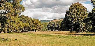 Stone Walls And Totara Trees, 529 Otaki Gorge Road, Te Horo