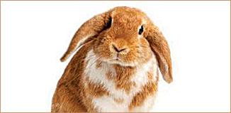F-JN15-Vet-rabbit.jpg