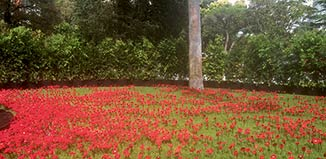 ANZAC memories — a garden of knitted Flanders poppies|A good place to lunch — outside the Royal Exhibition Building