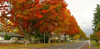 F_MY15_autumn.jpg