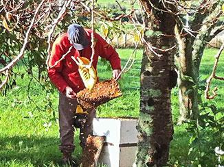 JN15-Bee-hive.jpg