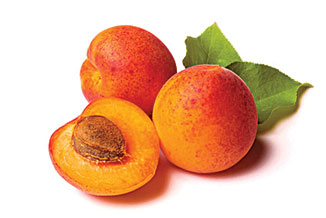 """APRICOT """"SOLAR PERFECTION"""" An exciting """"NEW"""" early fruiting apricot of excellent eating quality. Good sized excellent eating juicy fruit Crops from an early age. Suitable for warmer cli- mates. Self fertile. 3 x 3m"""