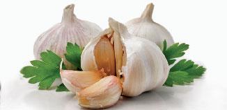 Garlic}