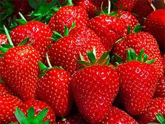 SE15_Watsons-strawberry.jpg