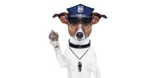 F_NO15_vet-dog-police.jpg