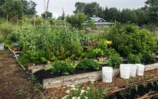 The garden is home to a wide range of vegetables, berry bushes and fruit trees