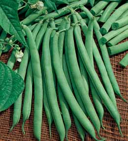 NO15_garden-green-bean-contender.jpg