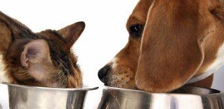 F_XS15_vet_pets-eating.jpg
