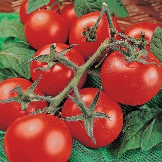XS15_garden_Tomato.jpg