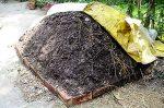XS15_taste_compost-heap
