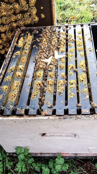 JL16_Bees