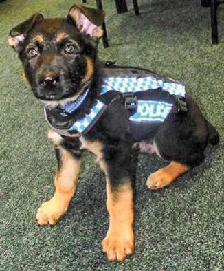 JL16_Police-Puppy