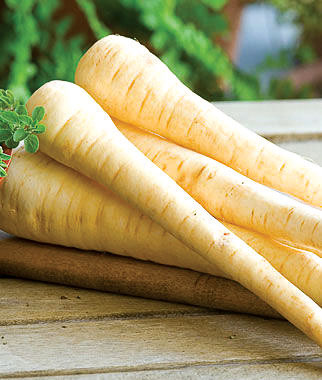 JL16_garden-Hollow-Crown-parsnip
